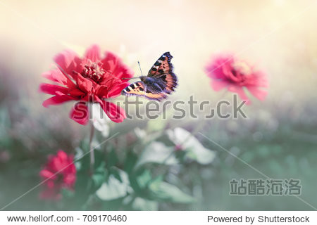 Wallpaper butterfly flutters over pink flowers in nature in open air close-up. Elegant graceful natural artistic image in retro vintage style in pastel colors. Background template for congratulations.