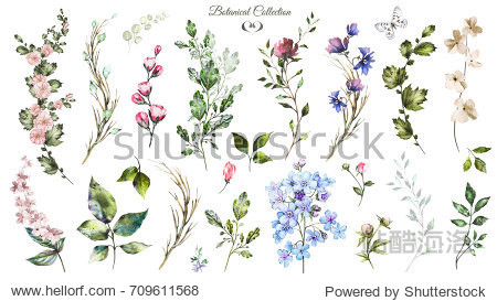 Big Set watercolor elements - wildflowers  herbs  leaf. collection garden and wild  forest herb  flowers  branches.  illustration isolated on white background  exotic  leaf. Botanic