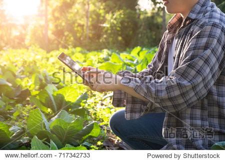 Agronomist using tablet computer on agriculture field and examining before harvesting. agriculture technology concept.