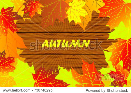 autumn - maple leaves - vector background  Autumnal leaf of maple  (Acer)