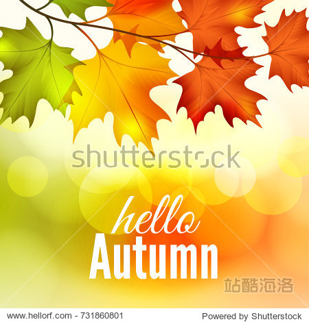 Fall colorful maple leaves on the bokeh background  vector illustration
