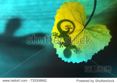 Silhouette of a lizard shadow on a green tropical leaf in nature on a blue and green background  close-up macro. Bright colorful artistic way of life of animals in nature.