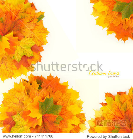 Autumn colorful leaves. Red  orange and green autumn leaves.