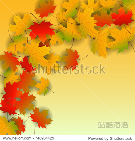 Autumn yellow  orange  red maple leaves background in vector. Nature colors of autumn. Falling colored leaves on white for banner  poster  leaflet  card  poster. Autumn botany landscape. Autumn fall.