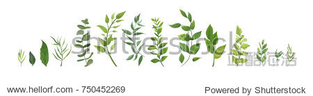 Vector designer elements set collection of green forest fern  tropical green eucalyptus greenery art foliage natural leaves herbs in watercolor style. Decorative beauty elegant illustration for design