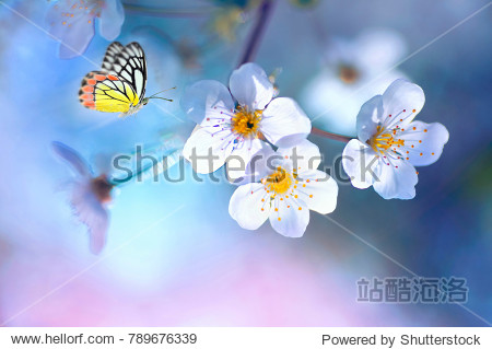 Beautiful colored butterfly  in flight and branch of flowering apple tree in spring at Sunrise on light blue and pink background macro. Amazing elegant artistic image nature in spring .