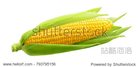 Single ear of corn isolated on white background as package design element