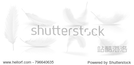 Vector realistic 3d set of white bird or angel feathers in various shapes  isolated on background. Symbol of lightness  innocence  heaven  literature and poetry. Decoration element for your design