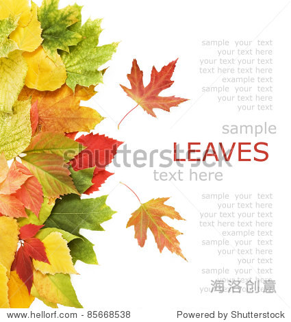 Yellow  red and green autumn leaves background with sample text
