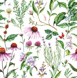 Hand-drawn watercolor seamless botanical pattern with different plants. Repeated natural background with meadow and medical plants: echinacea, coffe, lavender etc.