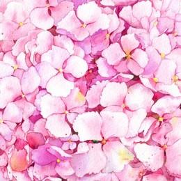 Pink hydrangea flowers background. Watercolor.