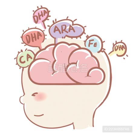 宝宝的大脑
