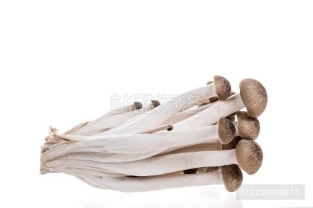白色背景上的真姬菇