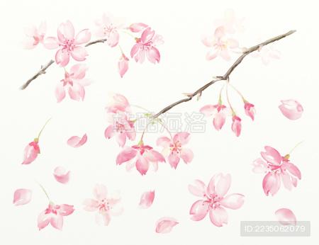 樱花水彩图案元素