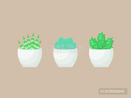 仙人掌 Succulent