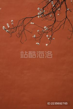 北京 故宫红墙杏花