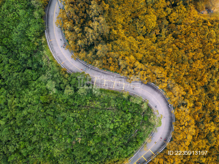 航拍弯曲的路穿过树林