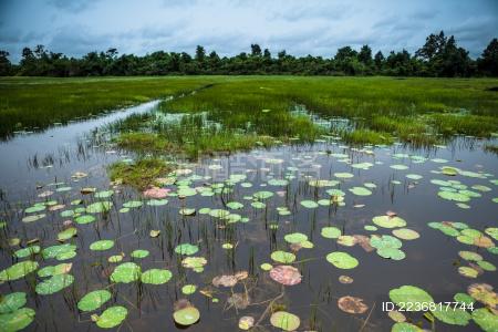 夏季湿地自然景观 水草丰盛