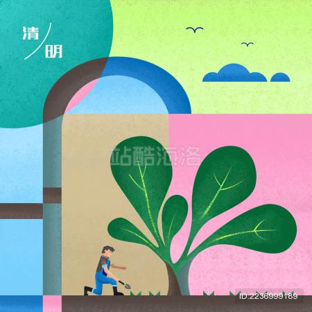 春季清明时节一位农民在给菠菜除草