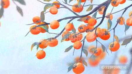 秋天枝头挂满柿子的柿子树霜降节气手绘插画