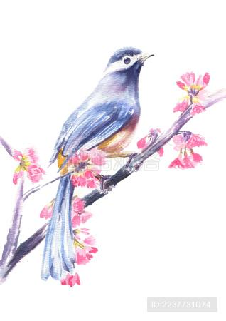 鸟儿站在枝头迎接春天的到来