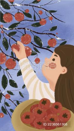 霜降小女孩摘柿子