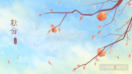 结着柿子的树枝搭配天空背景 左边写着秋分