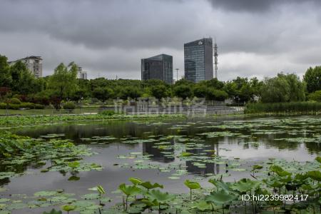 公园里的荷花池