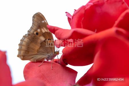 停在花朵上的蝴蝶