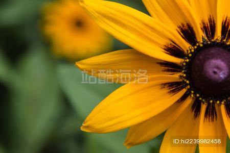 盛开的黄色花朵